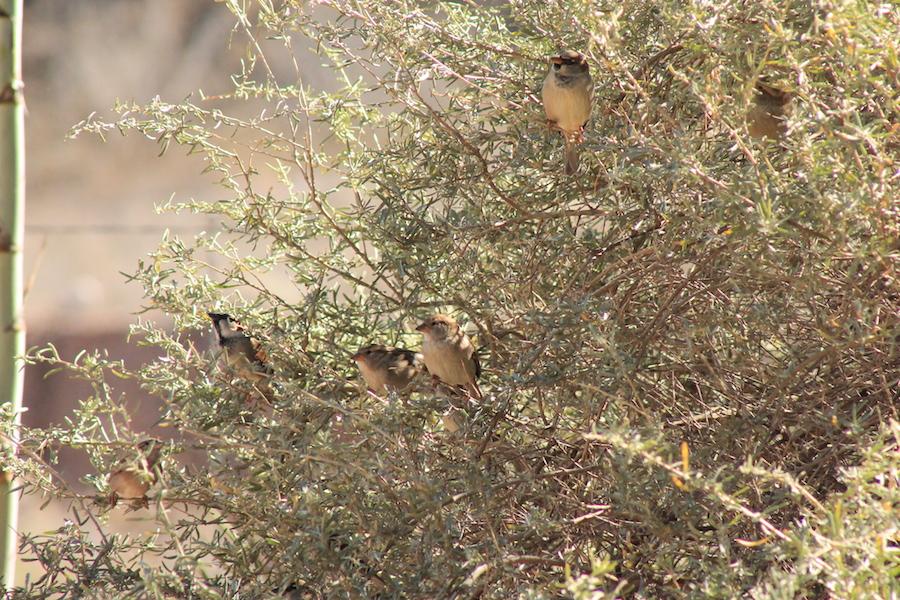 bird-watching-02