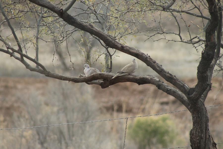 bird-watching-03