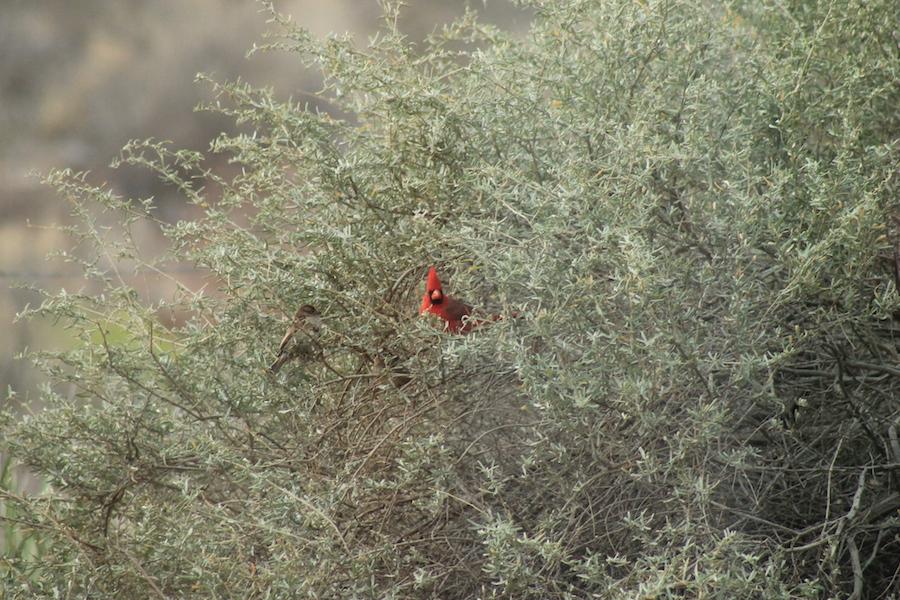 bird-watching-04
