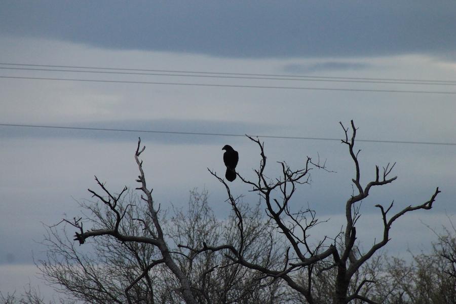bird-watching-05
