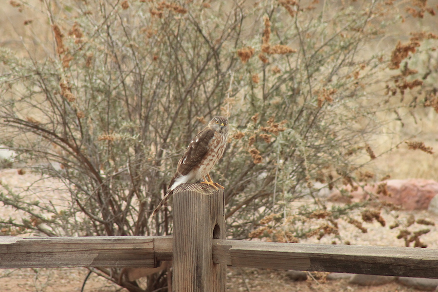 bird-watching-06