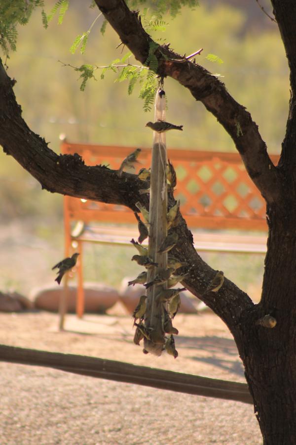 bird-watching-08