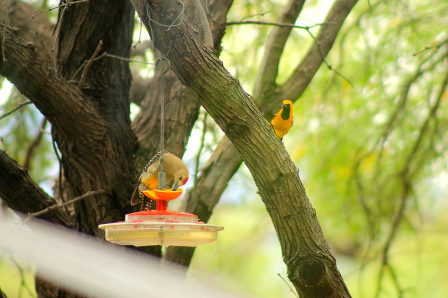 bird-watching-10