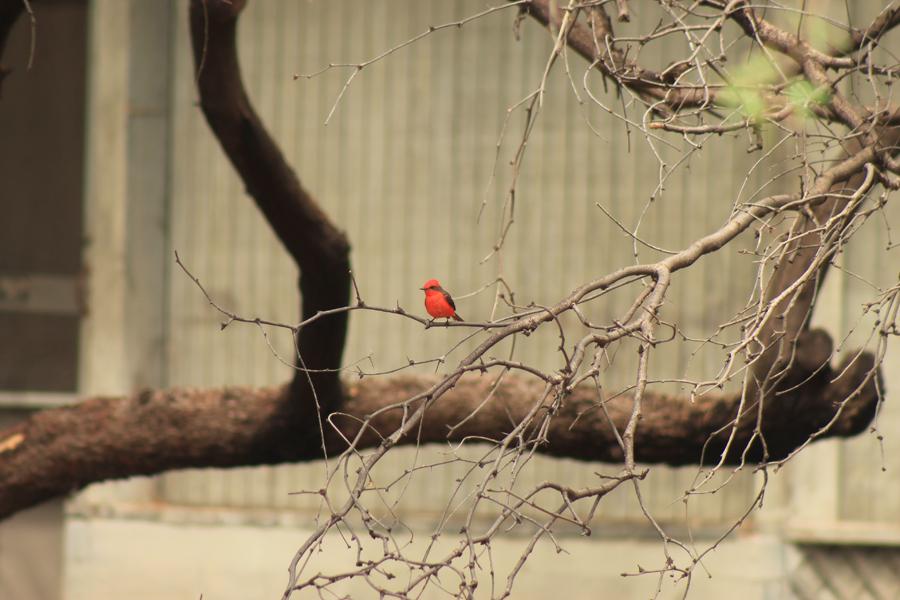 bird-watching-11