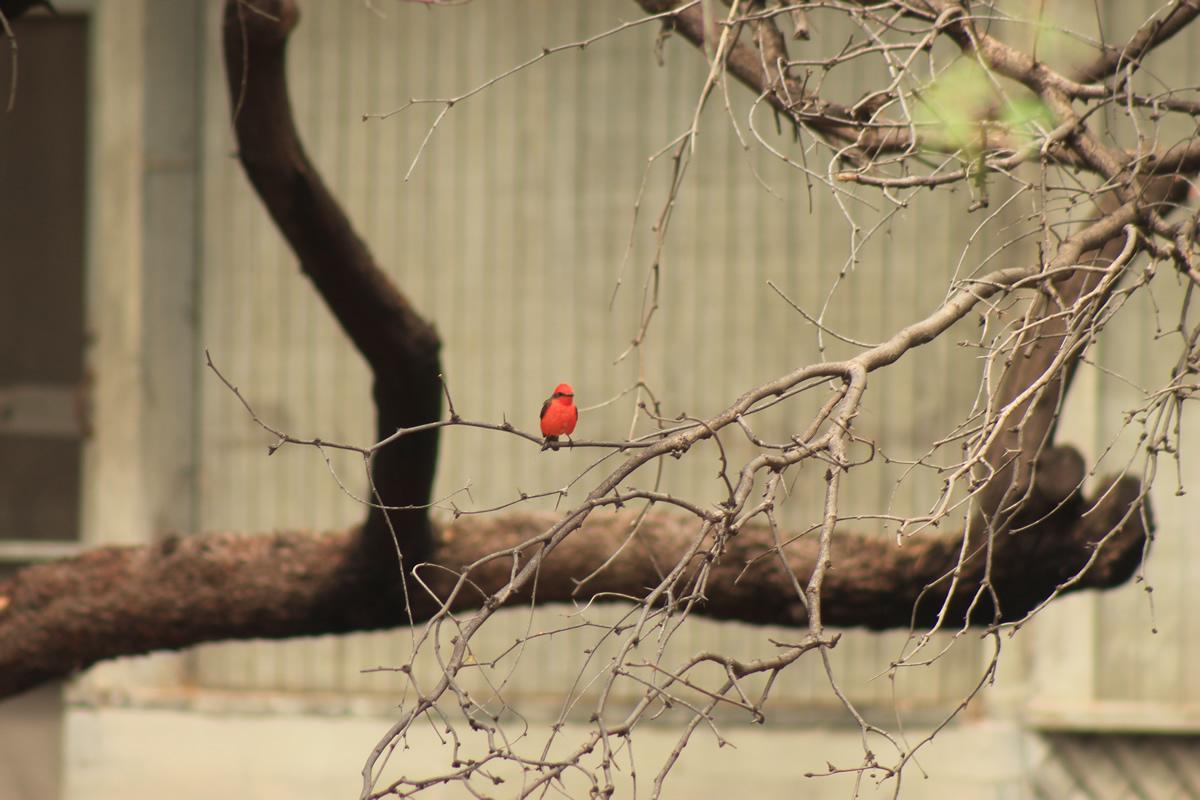 birding03