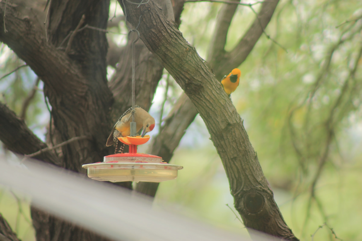 birding07