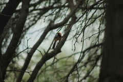 birding01