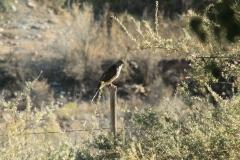 birding05